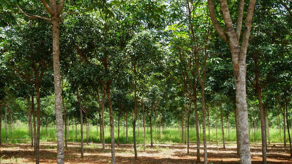 Timberfarm-Wald