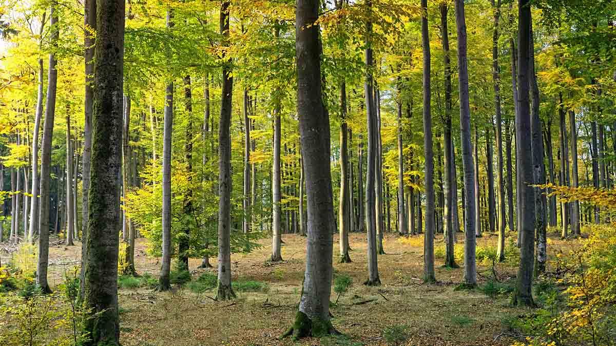 Umweltbundesamt erläutert Pläne und Voraussetzungen für zukunftsfähigen Wald
