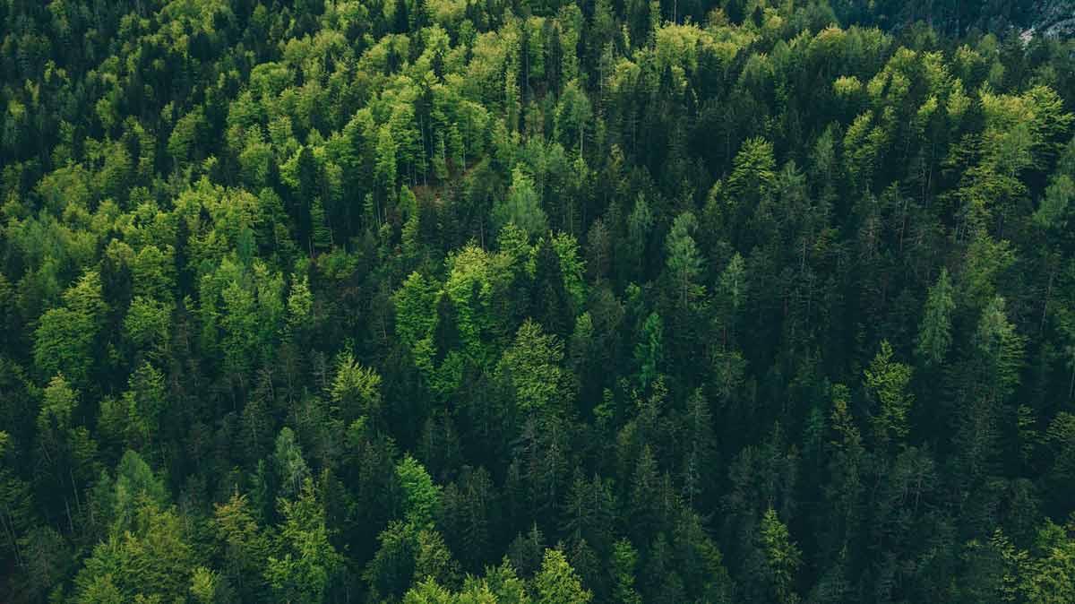 Greenwashing: BaFin plant strengere Regeln bei grünen Investments