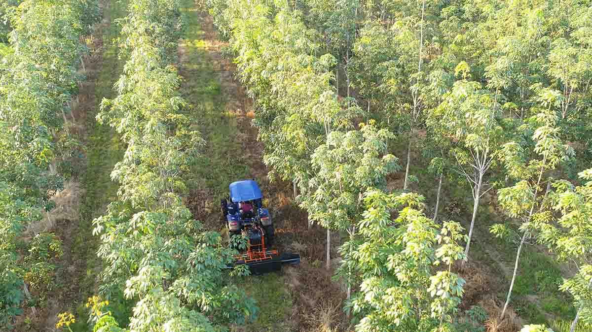 Die Timberfarm GmbH